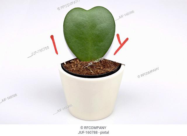 cactus - heart-shaped