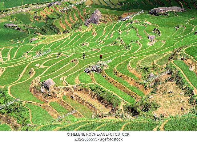 People working on irrigated rice terrace fields, Sapa surroundings, Vietnam, Asia