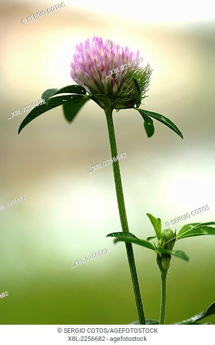 Flower Wine