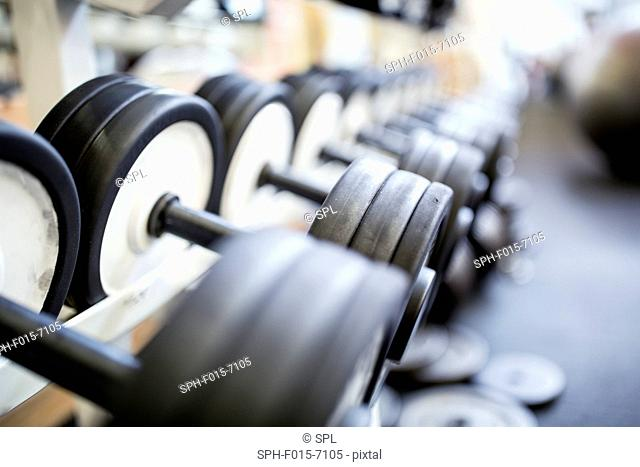 Close-up of heavy dumbbells arranged in row on rack