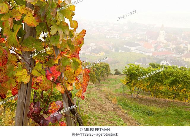 Vineyards above Spitz an der Danau, Wachau, Austria, Europe