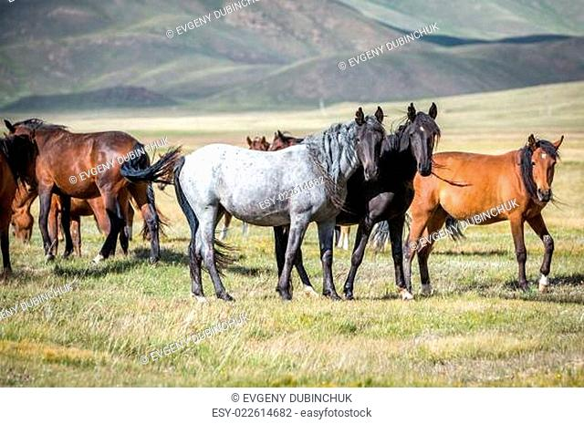 Group of horses looking at camera