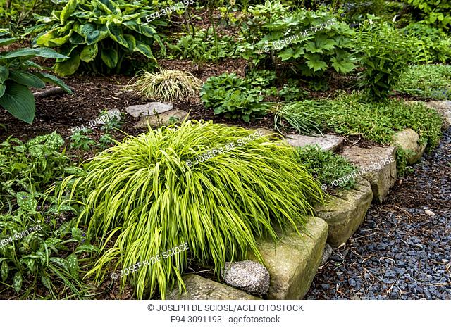 A shade garden featuring Hakonechloa macra 'All Gold', in the foreground