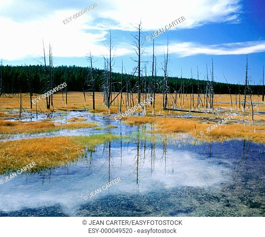 Firehole Valley after 1988 fire, Yellowstone National Park in September, Wyoming, USA