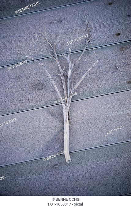 High angle view of frosted branch on hardwood floor