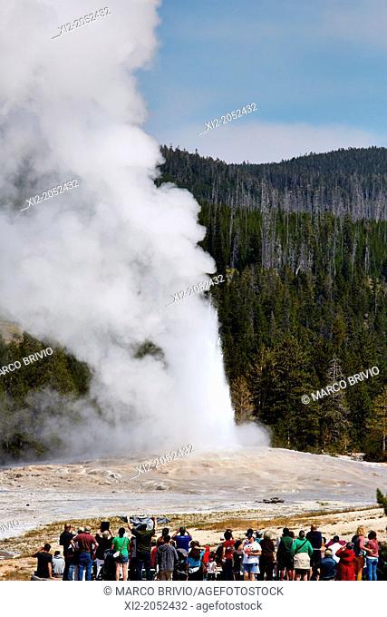 The Old Faithful geyser erupting, Yellowstone National Park. Wyoming, USA
