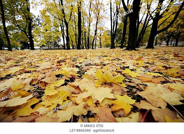 Autumn leaves in Helsinki, Finland