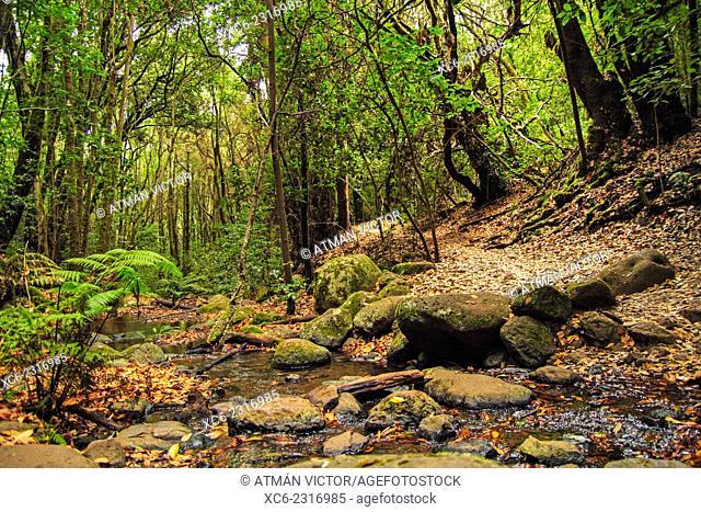 El Cedro National Park and forest in La Gomera island. Spain