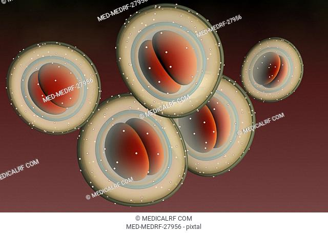 The structure of MRSA