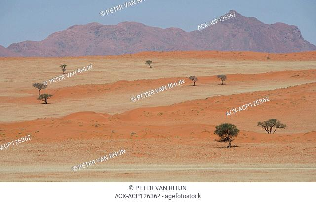 The layered landscape of the Namib Rand Nature Reserve near Wolwedans Dune Lodge. The layered appearance results from the longitudinal red dunes and mixed spars...