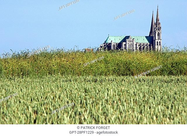 CHARTRES NOTRE-DAME CATHEDRAL SEEN FROM THE WHEAT FIELDS, EURE-ET-LOIR 28, FRANCE