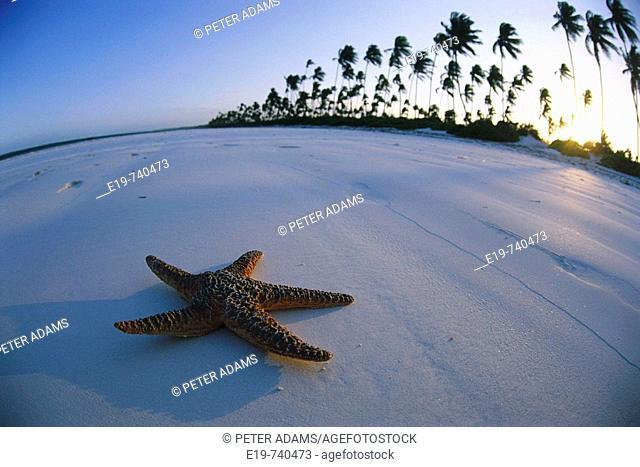Starfish on beach, Zanzibar, Tanzania