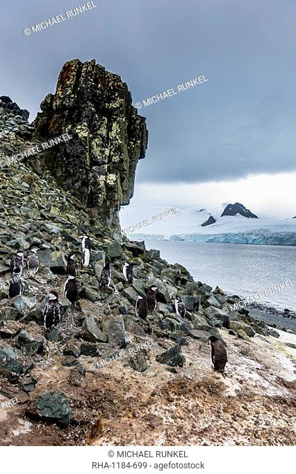 Penguins below dramatic rock formations, Half Moon Bay, South Sheltand islands, Antarctica
