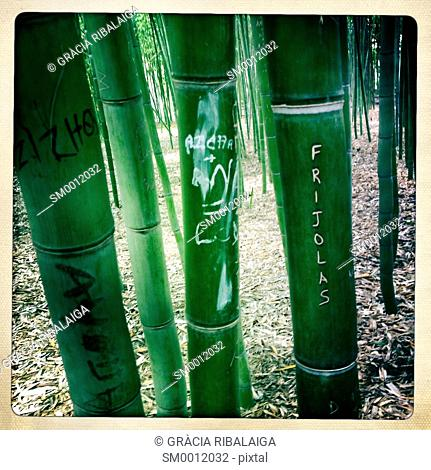 Closeup of bamboo canes With inscriptions in Fez, Morocco, Fes, Morocco, Africa