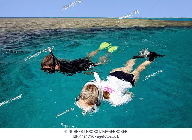 Man, Woman snorkeling, Coral Reef, Red Sea, Egypt
