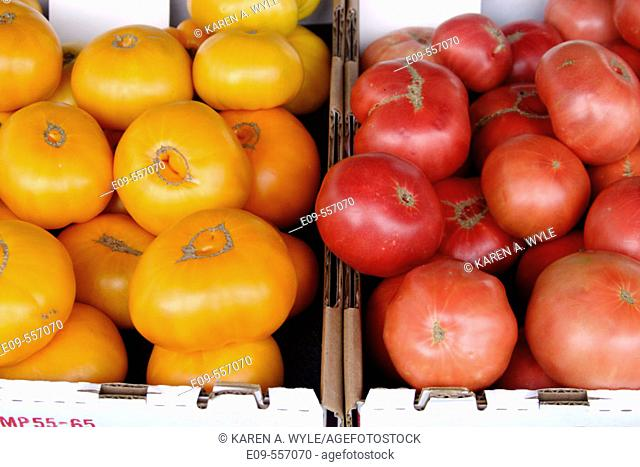 Yellow and red tomatoes in adjacent cartons at farmers' market in southern California, USA