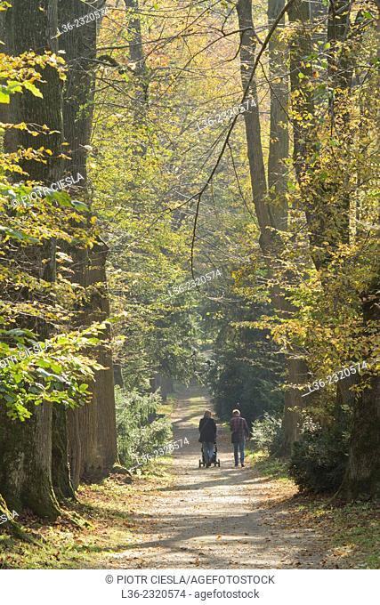 Autumn in Krasiczyn Palace Park. Poland