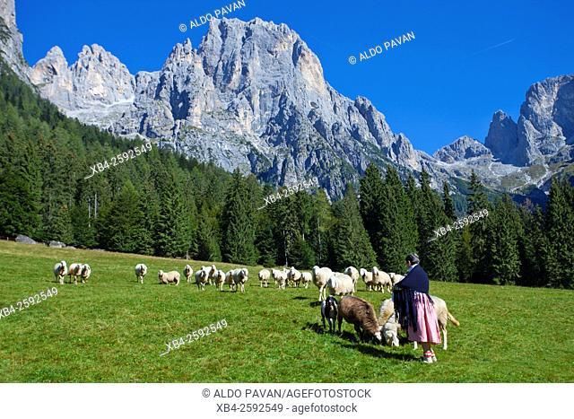 Herd of goats, Canali valley, Tonadico, Italy