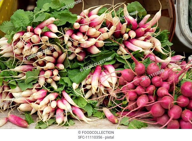 Fresh Bunches of Radishes at a Farmer's Market