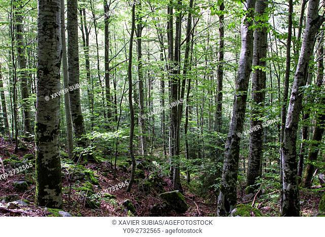 Forest near to Rila Monastery, Bulgaria