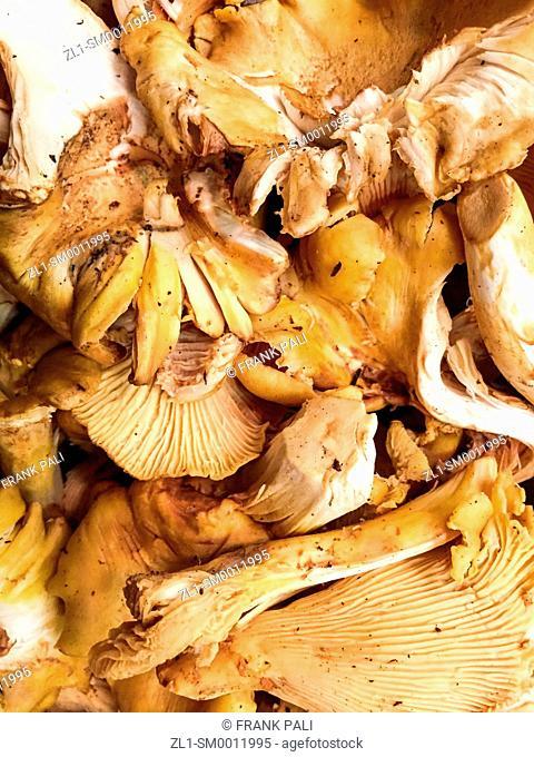 Wild Edible Mushroom
