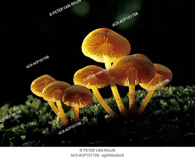 Mushrooms, Ontario, Canada