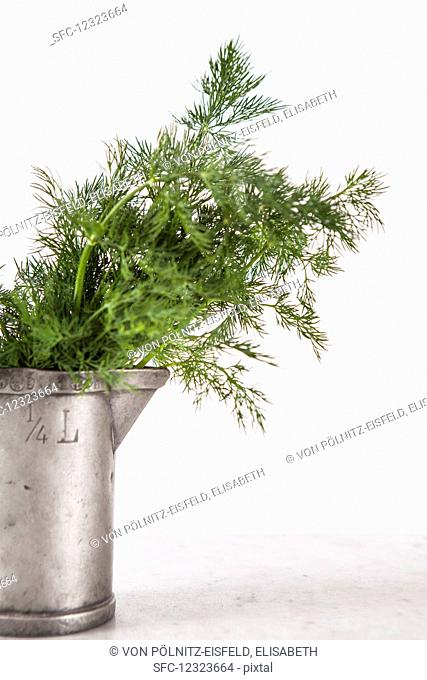 Fresh dill in a metal jug