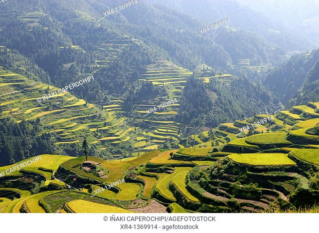 Terraces, Rice fields, Leigong Shan Nature Reserve, Montes Leigong, Guizhou, China