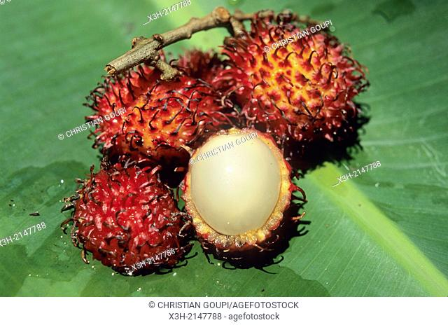 rambutan hairy lychee, Republic of Madagascar, Indian Ocean