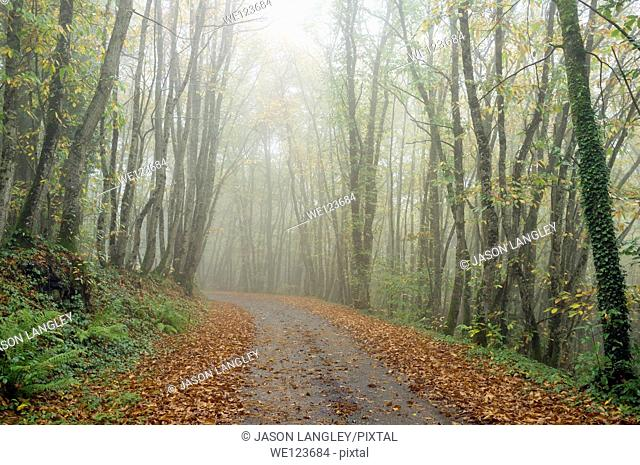 A small road through the forest on a foggy autumn day, La Creuse, Limousin, France