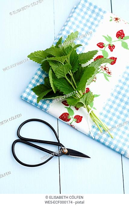Fresh mint leaves with scissors on wooden table, close up