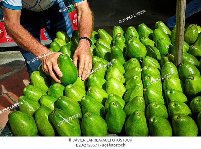 Avocados for sale, Parque Berrio, Medellin, Antioquia department, Colombia