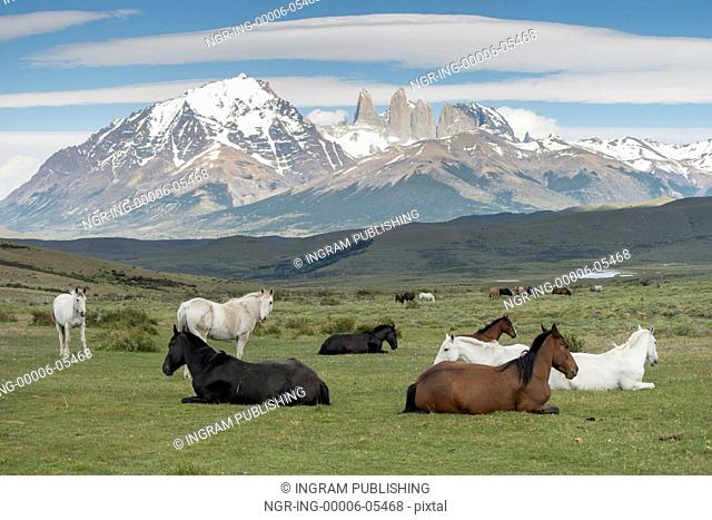 Horses in field, Torres del Paine National Park, Patagonia, Chile