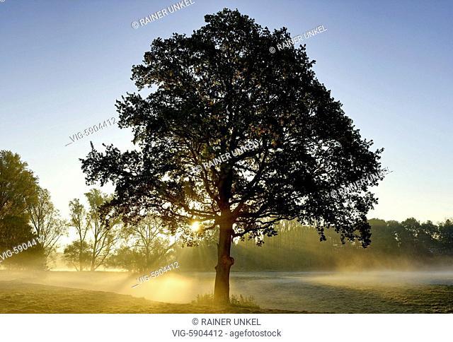 DEU , GERMANY : Autumn morning in the wetlands of Sieg river , 15.10.2017 - Menden, Northrhine-Westfalia, Germany, 15/10/2017