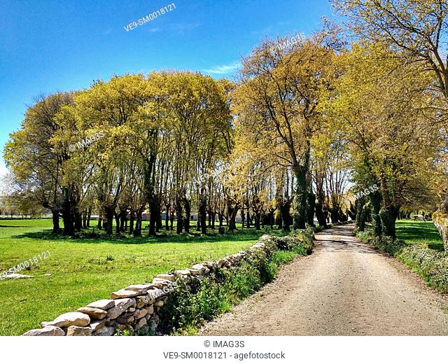 Camino de Santiago between Mercado da Serra and Leiman villages, Lugo province, Spain