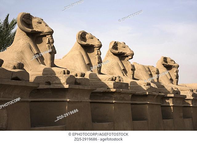 Corridor of Sphinxes of the god Amon Ra, Luxor, Egypt