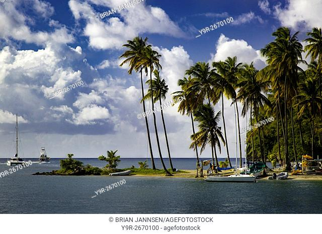 Palm trees at entrance to Marigot Bay, St. Lucia, West Indies