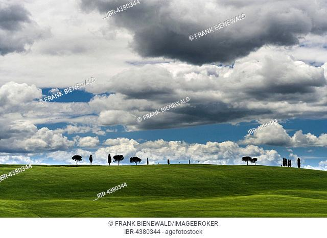 Typical green Tuscan landscape in Val d'Orcia with fields, pine trees, cypresses and blue, cloudy sky, San Quirico d'Orcia, Tuscan, Italy