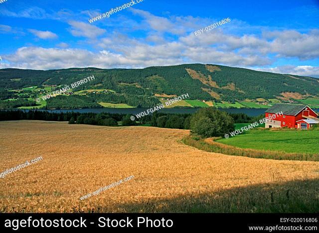 Landschaft - Kornfeld mit Bauernhof