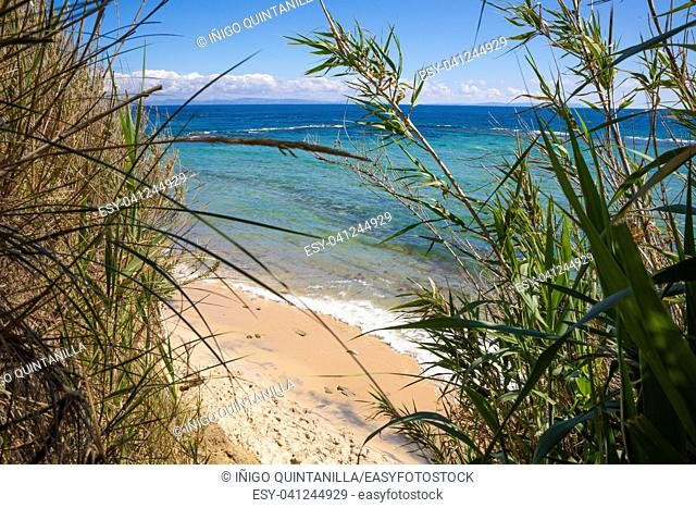 beautiful landscape of wild natural Beach Punta Paloma in Tarifa, Cadiz, Andalusia, Spain, from the cane forest
