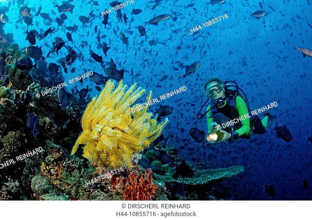 10855716, Maldives, Indian Ocean, Meemu Atoll, tri