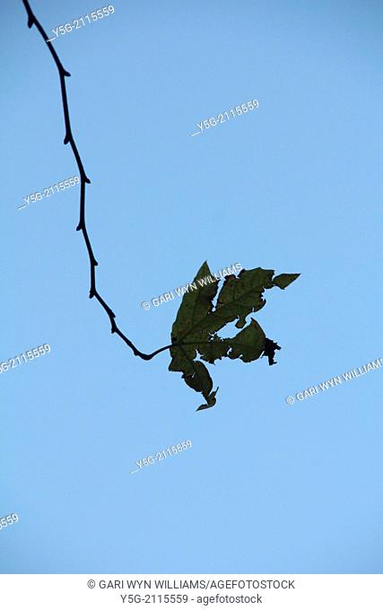dead leaf on tree branch