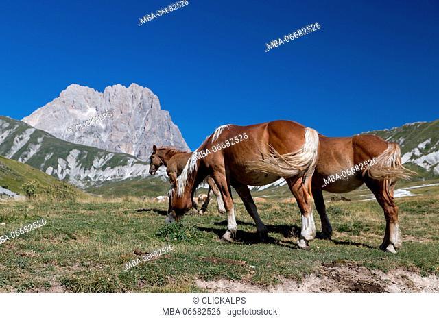 Europe, Italy, Abruzzo. Gran Sasso and Monti della Laga National Park