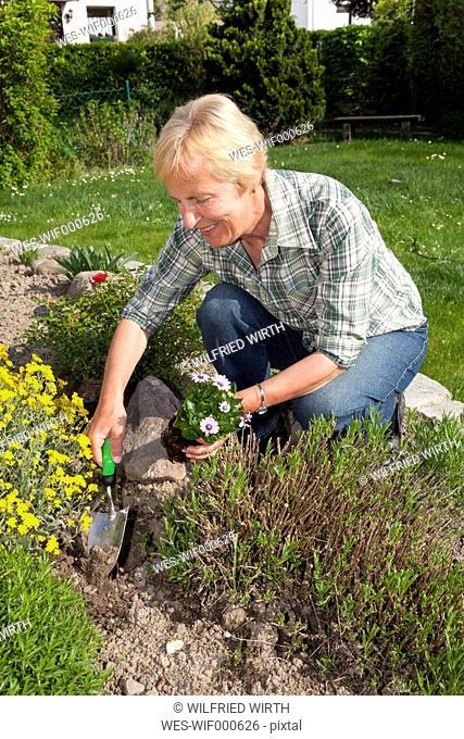 Germany, Woman planting flowers in garden