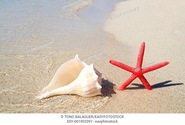 beach starfish and seashell in white sand tropical shore