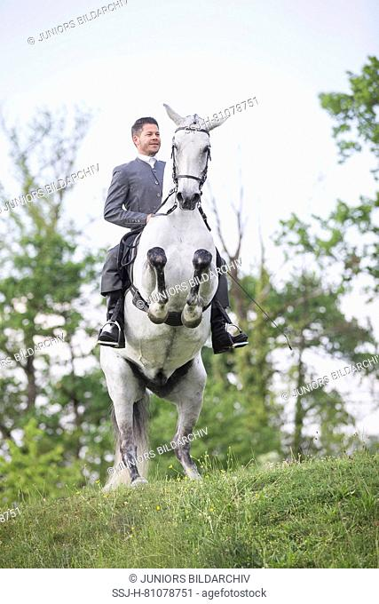 Pure Spanish Horse, Andalusian. Blind gelding performing a pesade with its rider and owner Sandro Huerzeler. Switzerland