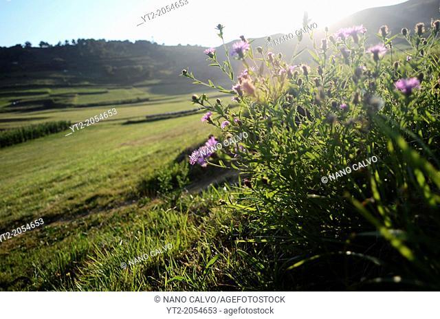 Beautiful landscapes next to Torimbia beach, Llanes