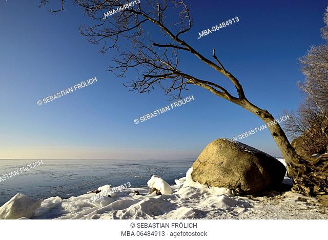 Big rock fragment or erratic block on the snow-covered shore of the German Baltic Sea with about that to growing tree in front of blue sky