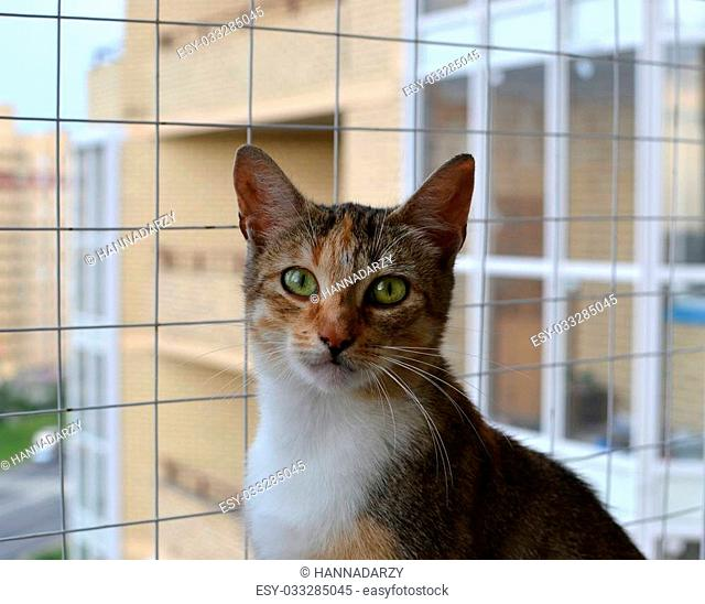 Three-colored cat with green eyes against the barred window