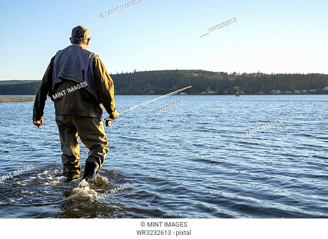 A fly fisherman walking to a new position in shallow salt water while fishing for searun coastal cutthroat trout and salmon